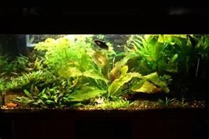 Aquarium Ohne Wasserwechsel : mein aquarium 300 liter spa ~ Eleganceandgraceweddings.com Haus und Dekorationen