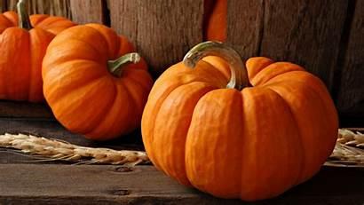 Pumpkin Backgrounds Wallpapers