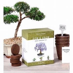Bonsai Growing Kit  Grow 4 Types Of Miniature Trees  Set