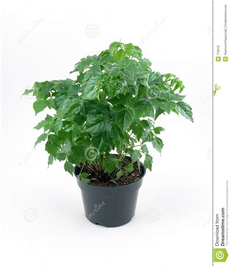 green house plant royalty  stock  image