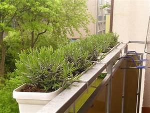 Lavendel Pflanzen Balkon : lavendel im balkonkasten schlitzflitzer ~ Lizthompson.info Haus und Dekorationen