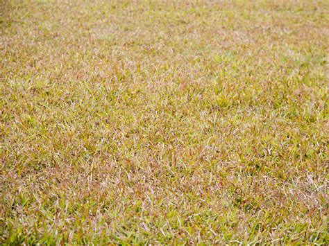 How To Keep Landscape Grasses From Spreading