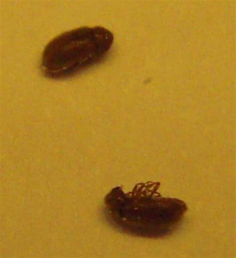insecte de cuisine petites betes dans la maison 28 images ces petites b