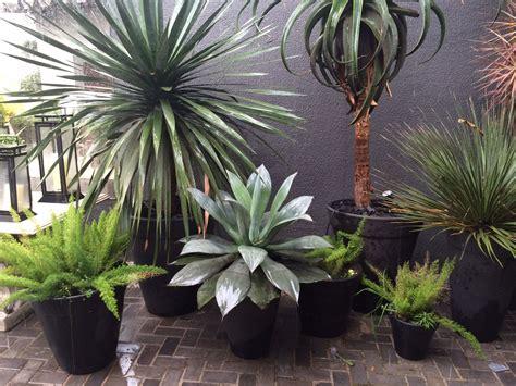 Vasos Pretos / Black Pots / Plantas Tropicais / Tropical