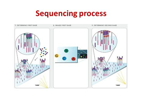 Sequencing Illumina by High Throughput Sequencing Ppt