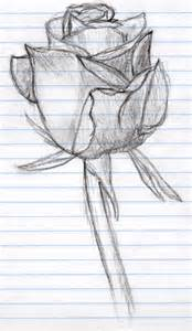 Rose Sketches Drawings