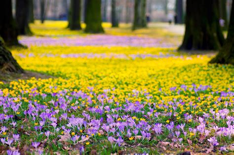 purple spring flowers wallpapers wallpapersafari