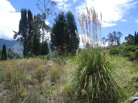 foto planta de sigse bayushig chimborazo ecuador