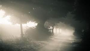 Morning Forest Foggy Laptop Backgrounds wallpaper