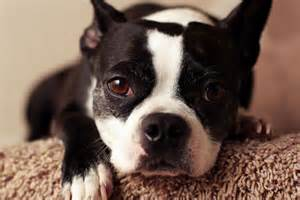 top 10 dogs that don t shed bang up lists