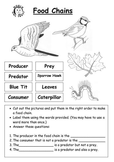 12 Best Images Of Food Web Worksheets For Middle School  Food Web Worksheet, Food Web