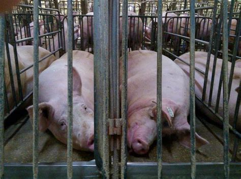 laws attempt   documenting animal cruelty  farms