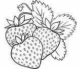 Coloring Berries Berry Fruits Vegetables Printable Summer Onion Strawberry sketch template