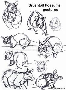 Brushtail Possums By Silverskye On Deviantart