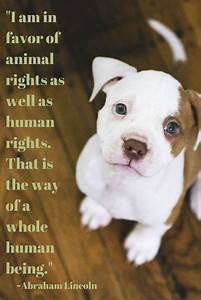U0026quot I Am In Favor Of Animal Rights As Well As Human Rights