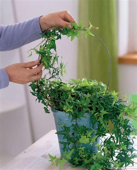 tuteur pour plante d int 233 rieur l atelier des fleurs