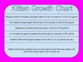cat weight chart kitten weight chart car interior design