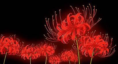 Sanemi Reader Douma Flowers Summary Aesthetic Wallpapers