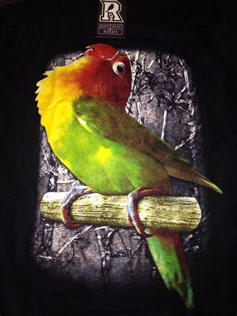 gambar burung love bird termahal gambar