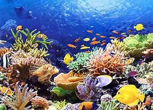 Bilder Mit Fischen : puzzle fische am korallenriff puzzle net ~ Frokenaadalensverden.com Haus und Dekorationen
