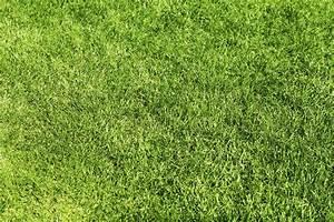 Rasenpflege Nach Vertikutieren : gartenpflege winterdienst g nagel rasen vertikutieren heckenschnitt garten pflege seit 2009 ~ Orissabook.com Haus und Dekorationen