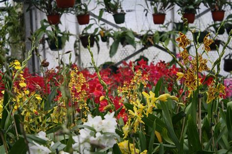 Orchideenschau Botanischer Garten München 2018 by Dresdner Ostern 2015 Aussteller A Z Orchideenfans