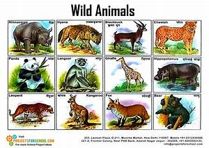 Kids Science Projects - Wild Animals 2 - free download
