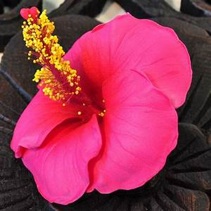 Hibiskus Stämmchen Kaufen : bl ten kunstblumen hibiskus rot g nstig kaufen ~ Buech-reservation.com Haus und Dekorationen