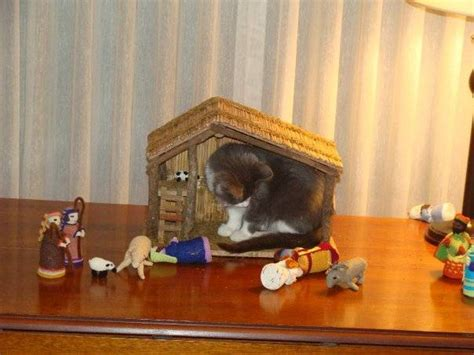 times cats crashed nativity scenes page