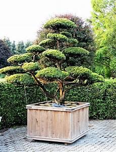 eibe schneiden landhausgarten mit formschnitten aus taxus With feuerstelle garten mit bonsai eibe