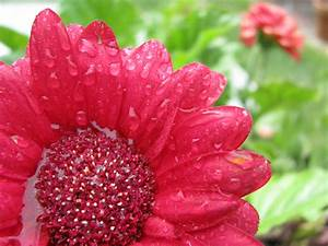 Flowers in Rain | Nature Wallpapers