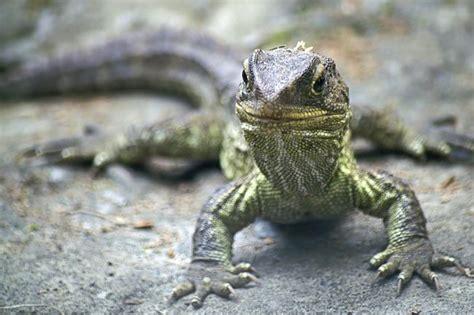 Fastest Evolving Creature Is 'living Dinosaur'