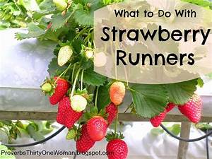 What to Do with Strawberry Runners | Proverbs 31 Woman