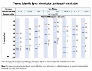 Spectra Multicolor Low Range Protein Ladder