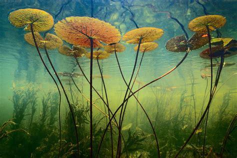 Лучшие фотографии природы • НОВОСТИ В ФОТОГРАФИЯХ