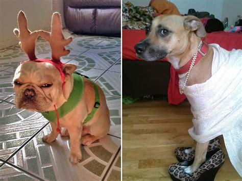 Dogs That Deserve an Apology