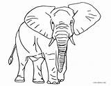 Elephant Coloring African Printable Colouring Sheets Drawing Colour Adults Preschool Visit Cool2bkids Ius Tech sketch template