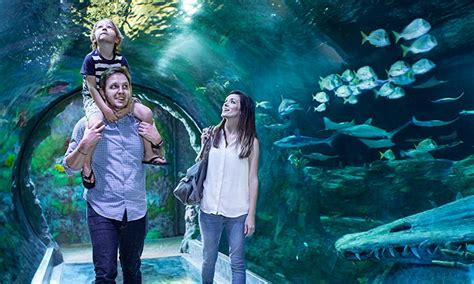 sea life orlando aquarium  orlando fl groupon
