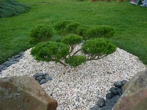 carnage dans les graviers boutures de reves le jardin With cailloux d ornement pour jardin