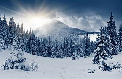 Forest Winter Nature Wallpapers Direct