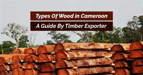 A Guide By Timber Exporter