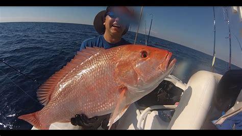 snapper american fishing