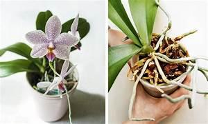 Le piante da mettere in bagno: tillandsie e orchidee CASAfacile