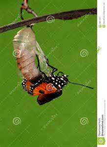 Cocoons Turn into Butterflies