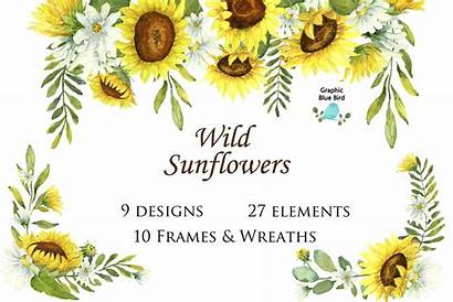Clip Watercolor Sunflowers Wild Designed Graphics Wildflowers