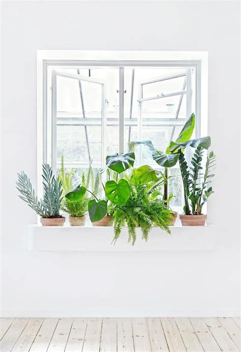 Window Potted Plants by Best 25 Window Plants Ideas On