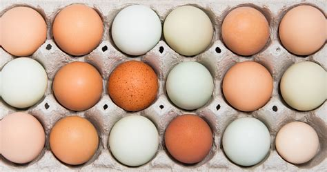 eggshell color egg shell colour chart by breed of hen the poultry pages