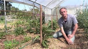 Arrosage Des Tomates : l 39 arrosage sous serre youtube ~ Carolinahurricanesstore.com Idées de Décoration