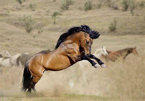 wild horses mating habits animals momme
