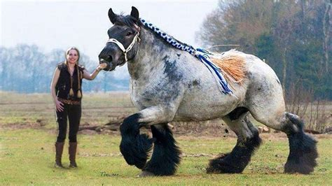 horses horse animals breeds biggest there number different pretty around rare some